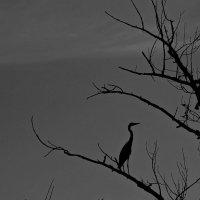 Ночь :: Александр Брикс
