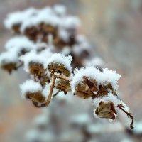 Первый снег :: Наталия M