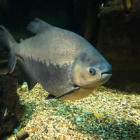 Гигант в аквариуме :: Damir Si
