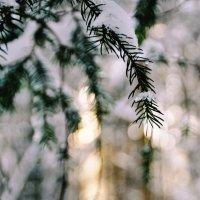 Зимний лес :: Ketrin Pichugov
