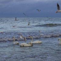 Зимнее море ... :: Михаил Юрин