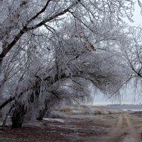 Зима без снега :: Dr. Olver  ( ОлегЪ )