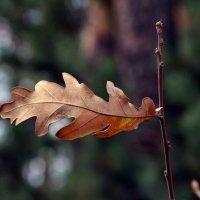 Поздней осени листок... :: Виктор Бусель