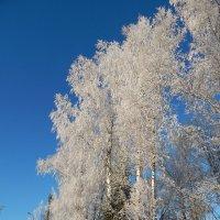 Зима :: Максим Есменов