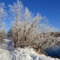 Морозный день :: Ольга