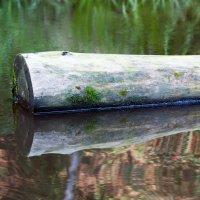 На воде :: Клиентова Алиса