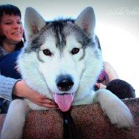 милая собачка Юки :: Людмила Бадина