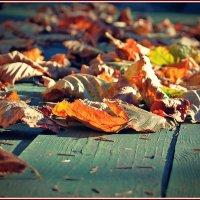 осень на моем столе :: Дмитрий Анцыферов