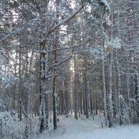 Светлый лес :: Галина