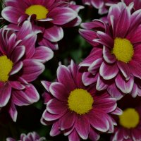 цветы :: дмитрий глебов