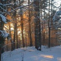 солнечные лучики :: Светлана