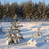 Мороз снежком укутал... :: Вера Саитхужина
