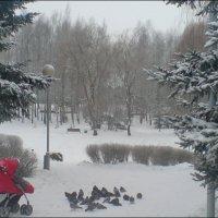 На прогулке :: Светлана Олейник