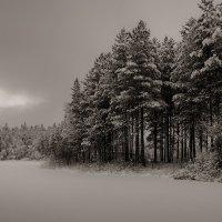 Свинцовое небо, седой лес :: Алексей Калугин