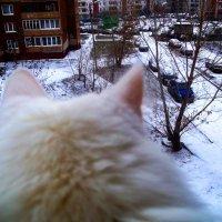 Взгляд кошки на наш двор :: Владимир Ростовский