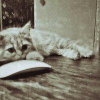 кошки мышки :: Александр