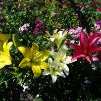Разноцветье. :: Антонина Гугаева