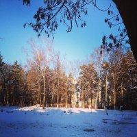 Морозное утро :: Екатерина Василькова