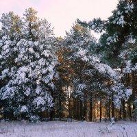 В новогоднем лесу :: Павлова Татьяна Павлова