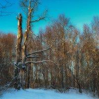 Зимний лес :: Иван Анисимов