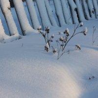 Снежка и солнца нежное касание :: Татьяна Копосова