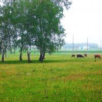 Сельский пейзаж :: Владимир Ростовский