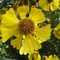 Желтый и красивый :: Лебедев Виктор