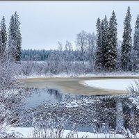 Зима в архангельских лесах :: Владимир Прынков