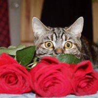кошка :: Машуня Орлова