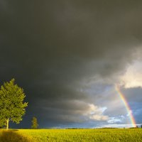 После дождя :: Rimantas