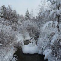 В волшебном лесу :: Галина