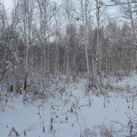 Зимний лес :: Галина