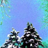 В снегу :: Лариса Корженевская