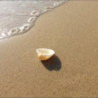 Море :: Swetlana V