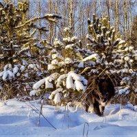 Почти волк :: Андрей Дворников