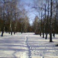 Алея :: Миша Любчик