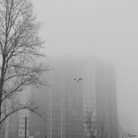 Полет сквозь туман :: Тамара Гереева