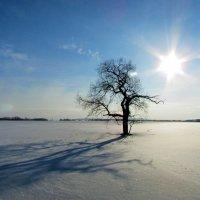 Снежная пустыня... :: Константин Филякин