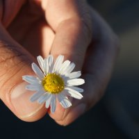 Сила и нежность :: nika555nika Ирина