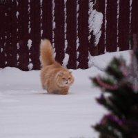 Выпал первый снег :: Ирина Токарева