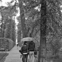 Летний сад. Дождь :: Наталья