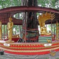 Лаос. Вьентьян. Семь статуй Будды вокруг старого дерева :: Владимир Шибинский