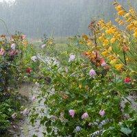 Летний дождь :: Валентин Котляров