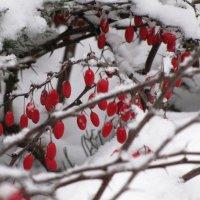 Занесенные снегом :: Ольга Иргит