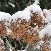 Под снегом :: Ольга Иргит