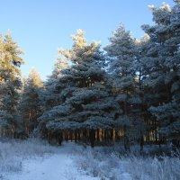 В Новогоднем лесу :: nika555nika Ирина