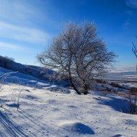 Зимнее утро :: Николай Николенко