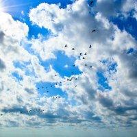 небо... :: Alena Al'eva