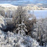 Зимний лес :: Константин Филякин