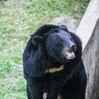 Медведь :: Pavel Ivanov